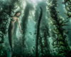 Mermaid in Kelp, Zac Macaulay, Underwater Photographer